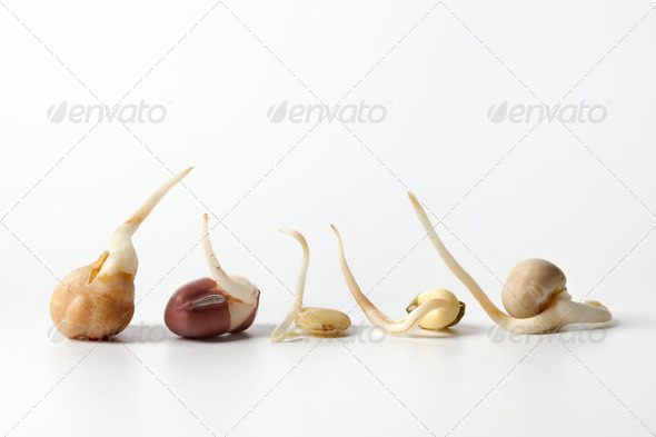 Different types of sprouts close up - Stock Photo - Images