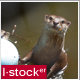 Otter In Zoo Pack 1 - VideoHive Item for Sale