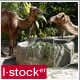 Camel In Zoo Pack - VideoHive Item for Sale