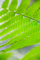 Green fern leaves - PhotoDune Item for Sale