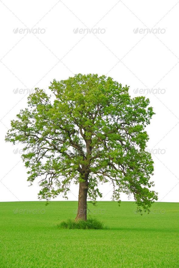 PhotoDune Tree 182665