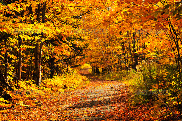 Fall Forest - Stock Photo - Images