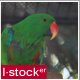 Parrot In Zoo 1 Pack - VideoHive Item for Sale