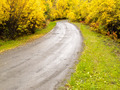 Fall rain on rural dirt road thru yellow willows - PhotoDune Item for Sale