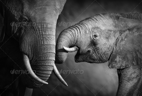 Elephant affection (Artistic processing) - Stock Photo - Images