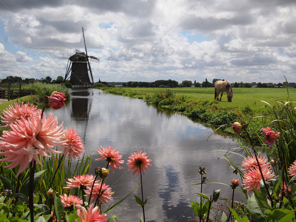 Dutch landscape with flowers and windmill