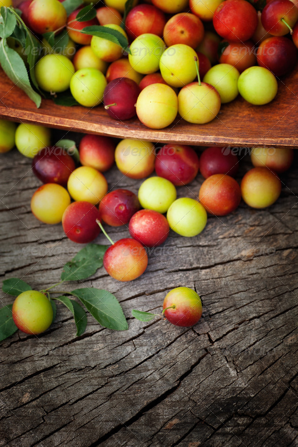 Wild plums - Stock Photo - Images