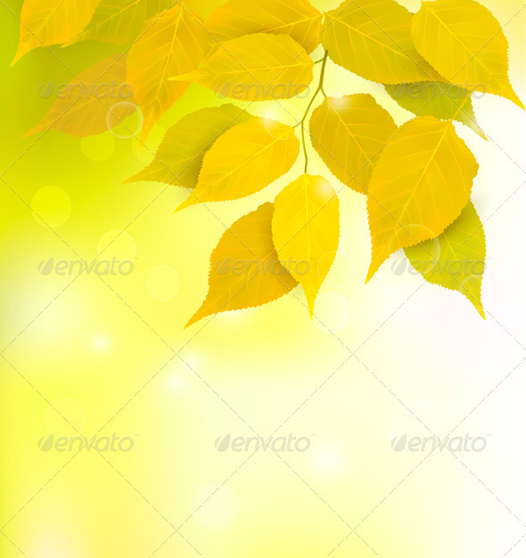 Autumn background with yellow leaves. Vector - Seasons Nature