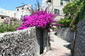 Gate covered in bougainvillea - PhotoDune Item for Sale