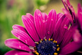 Raindrops on purple flowers - PhotoDune Item for Sale