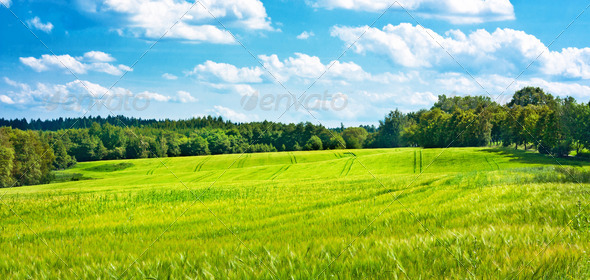 Barley fields undulating in the middle of woods - Stock Photo - Images