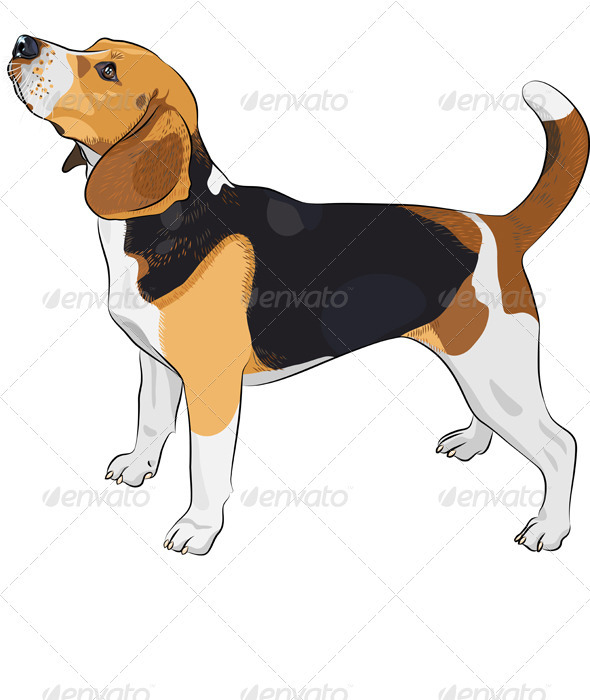 Vector Sketch Dog Beagle Breed  - Animals Characters