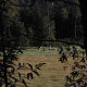 Tracking Shot Of A Green Meadow With Trees - VideoHive Item for Sale