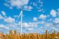 wind turbines in wheat field - PhotoDune Item for Sale