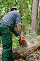 Lumberjack working with chainsaw - PhotoDune Item for Sale