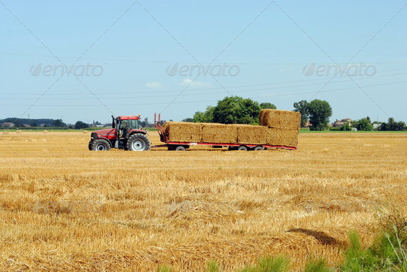 tractors load bales of hay in farmlands - Stock Photo - Images