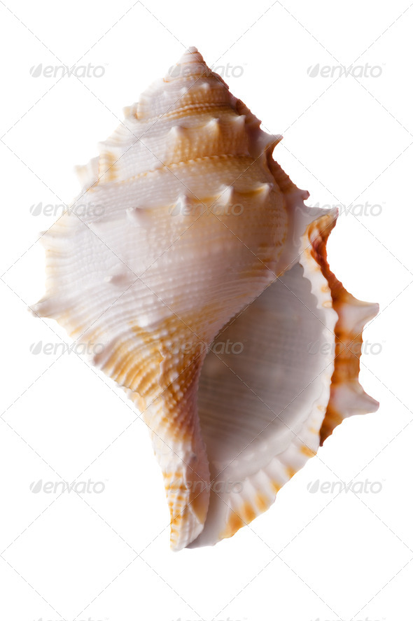 Empty sea shell - Stock Photo - Images