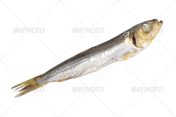 Fish food isolated - Stock Photo - Images