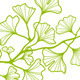 Ginkgo Branch With Leaves, Vector - GraphicRiver Item for Sale