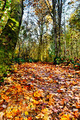Leafy trail through woods - PhotoDune Item for Sale