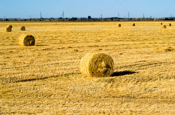 Farm field with hay bales - Stock Photo - Images