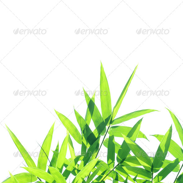 Bamboo leaves - Stock Photo - Images