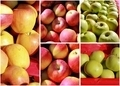 Apple Collage - PhotoDune Item for Sale
