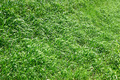 Spring grass as herbal texture - PhotoDune Item for Sale