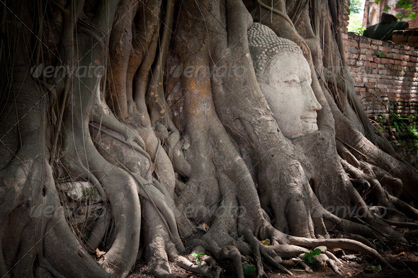 Head of Sandstone Buddha - Stock Photo - Images
