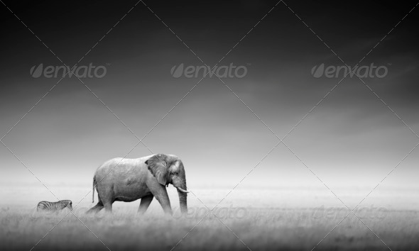 Elephant with zebra (Artistic processing) - Stock Photo - Images