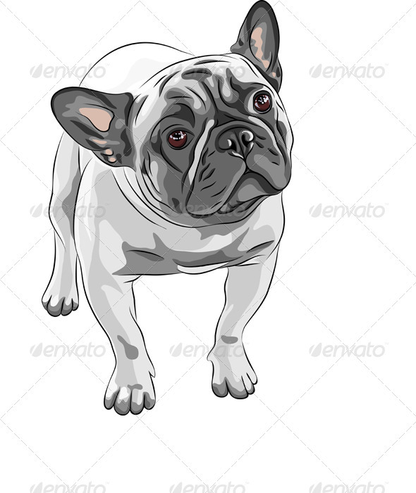 GraphicRiver Vector sketch Domestic Dog French Bulldog Breed 2782220