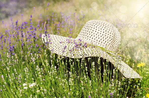 Summer hat over lavender flowers - Stock Photo - Images