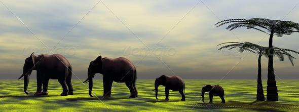 elephants - Stock Photo - Images