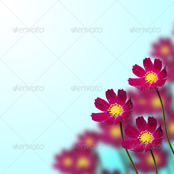 red flowers on a blue - Stock Photo - Images