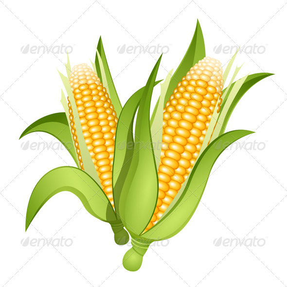 Ears of corn - Food Objects
