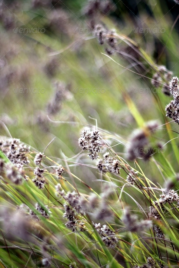 grass blur - Stock Photo - Images