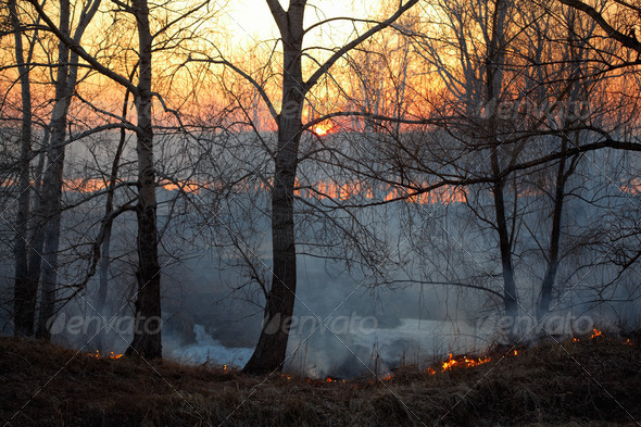 Forest fire - Stock Photo - Images