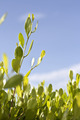 green leaves that help reduce global warming - PhotoDune Item for Sale