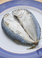 mackerel - PhotoDune Item for Sale