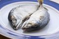 mackerel - PhotoDune Item for Sale