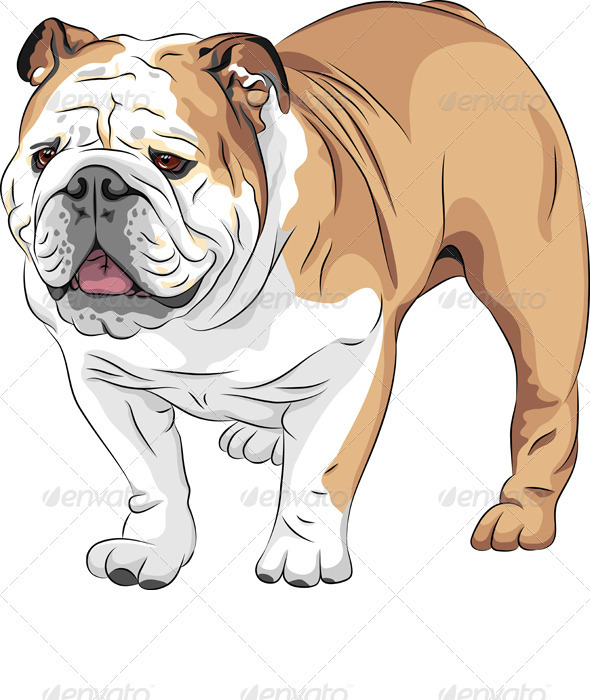 Vector Sketch Dog English Bulldog Breed - Animals Characters