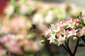 Flying Bee with Pink and Green Flowers - PhotoDune Item for Sale
