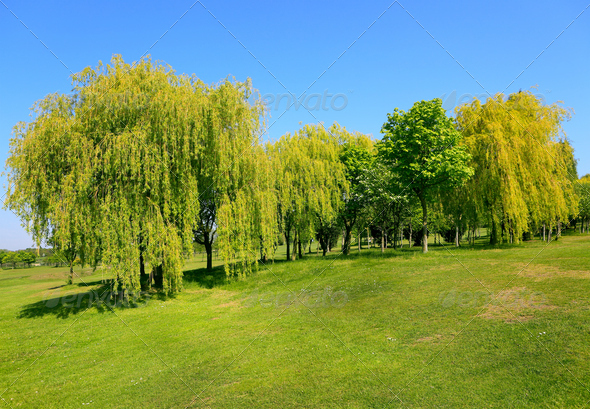 Golf field - Stock Photo - Images