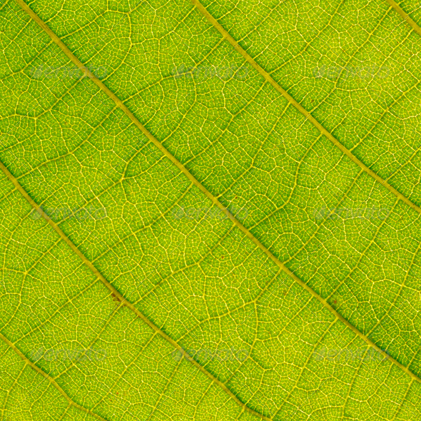 leaf close up - Stock Photo - Images