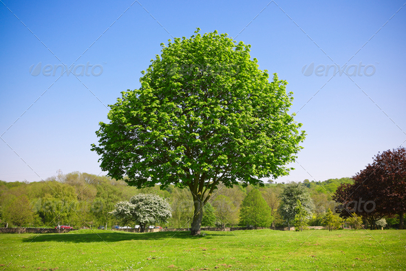 Tree in the park - Stock Photo - Images