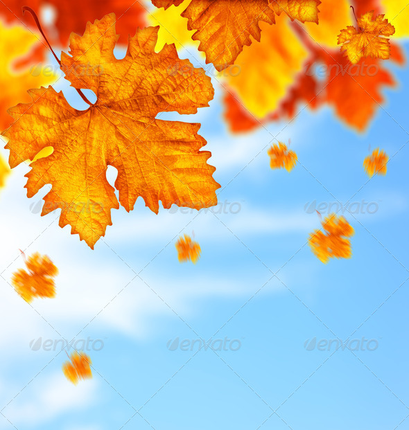 Beautiful autumn tree leaves background border - Stock Photo - Images