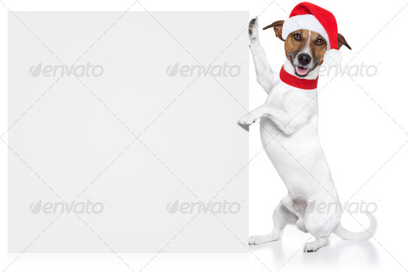 christmas dog placeholder - Stock Photo - Images
