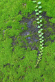 Green moss growing on the wall and ivy 1 - PhotoDune Item for Sale