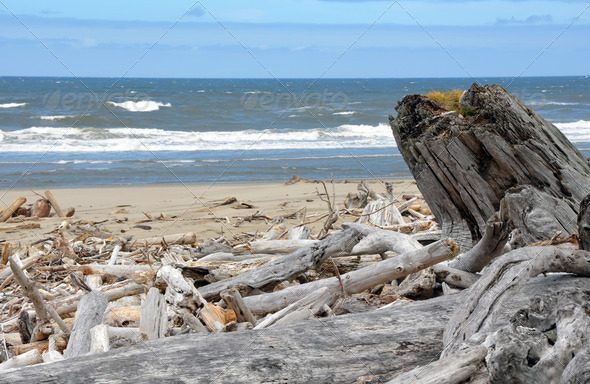 Oregon coast and driftwood - Stock Photo - Images