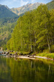 Altai river Kumir - PhotoDune Item for Sale